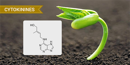 Plant Hormones - Types Of Plant Hormones And Their Functions