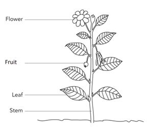 biology of plants  parts of plants and their functions byjus