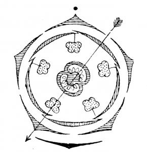 Solanaceae - flowerdiagram