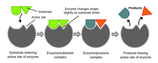 Nature of Enzymes action