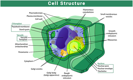 Important Science Diagrams From All Chapters For Cbse Class 8