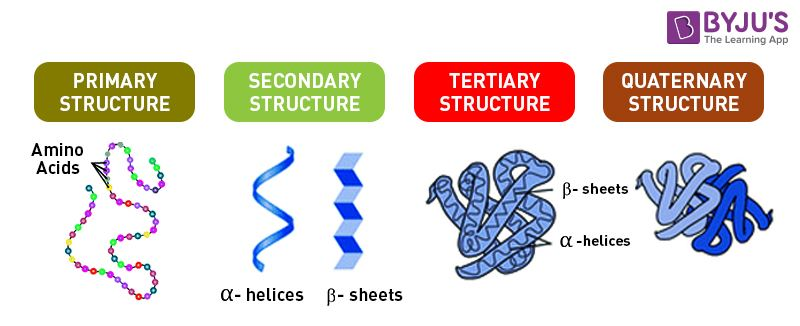 Proteins Structure