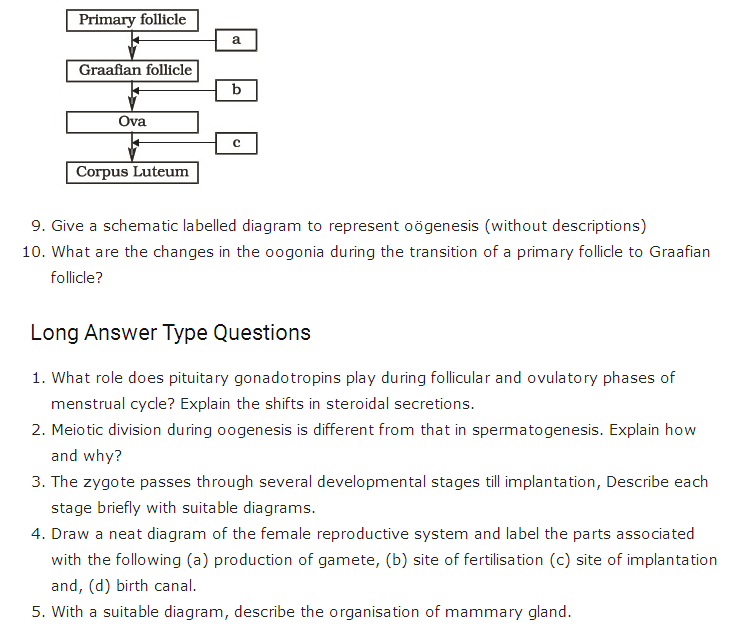 Important Questions Class 12 Biology Chapter 3 Human Reproduction Part 3