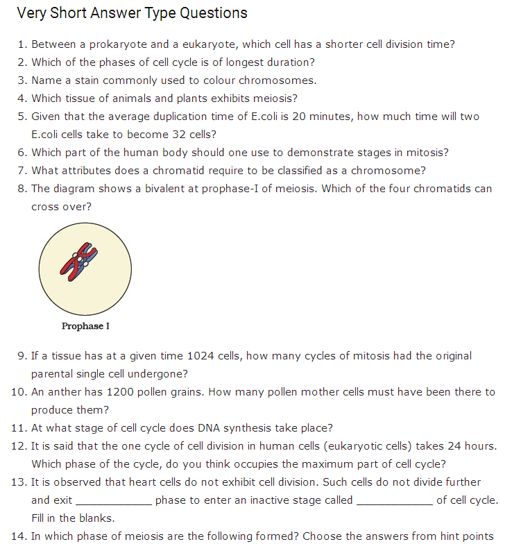 Important Questions Class 11 Biology Chapter 10 Cell Cycle Cell Division Part 1