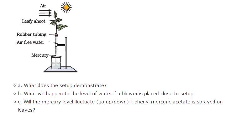 Important Questions Class 11 Biology Chapter 11 Transport Plants Part 7