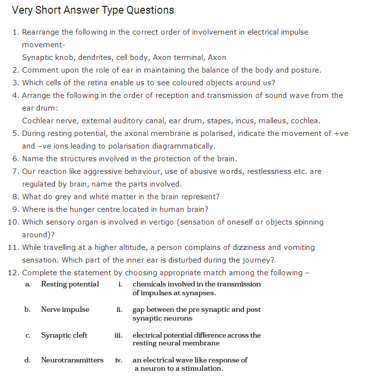 Important Questions Class 11 Biology Chapter 21 Neural Control Coordination Part 1