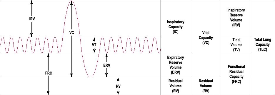 Lung's Volumes