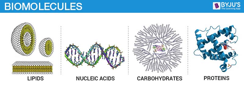 Types of Biomolecules