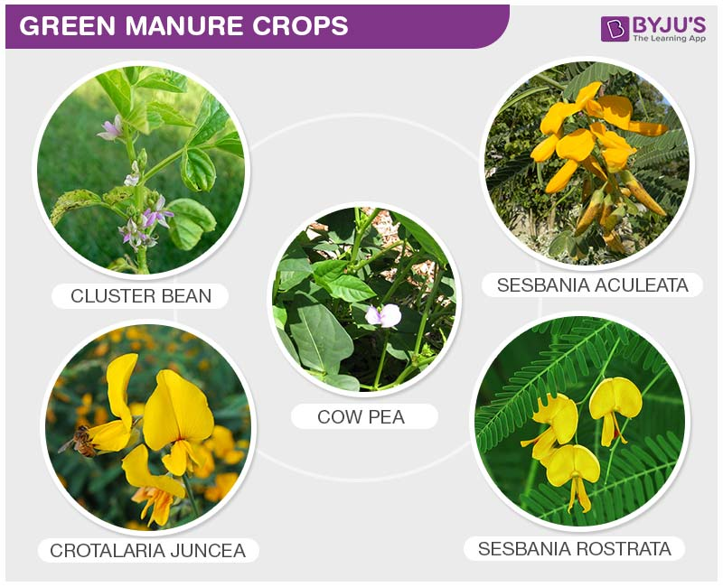 Green Manuring Vs Fertilizers