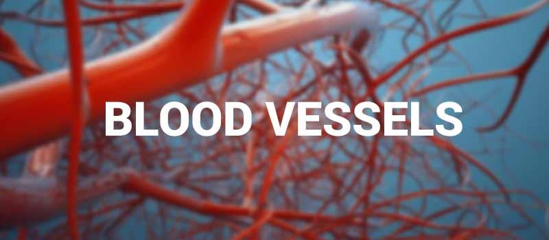 Image result for Blood vessels