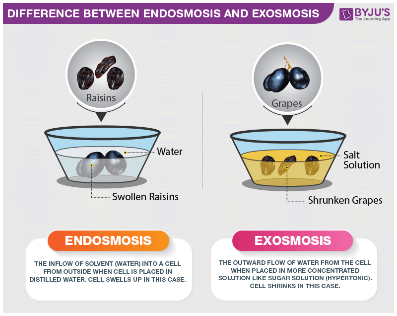Difference Between Endosmosis And Exosmosis