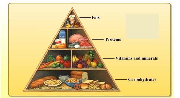 food_triangle