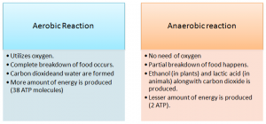 Aerobic reactiona nd anaerobic reaction