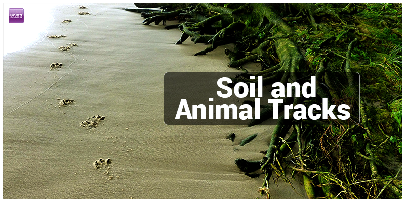 Types of Soil and Animal Tracks