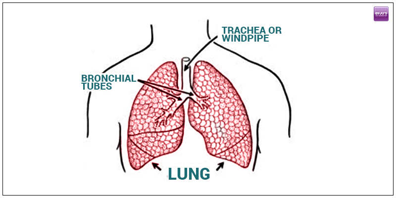 Lung Volume