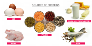 SOURCES-OF-PROTEINS