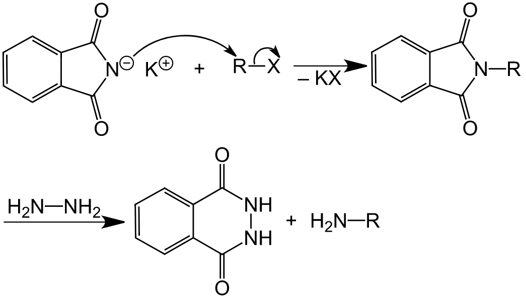 Gabriel Phthalimide Synthesis