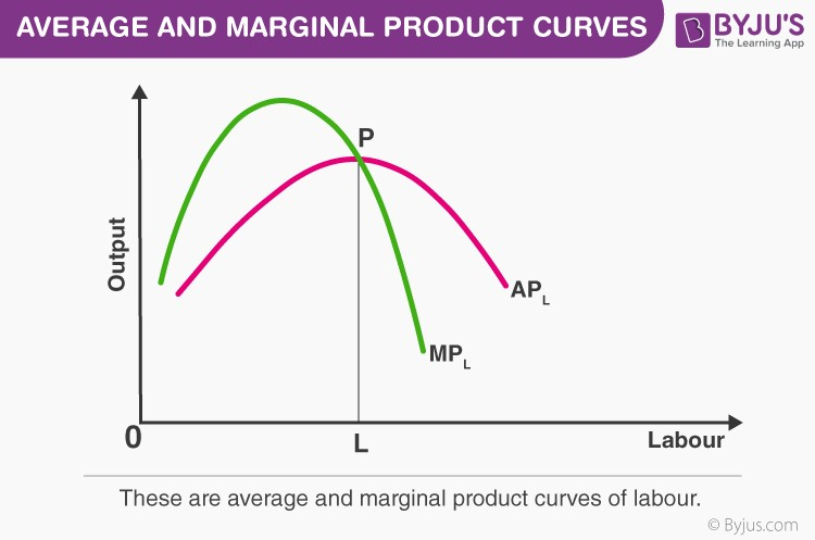 Average And Marginal Product Curves