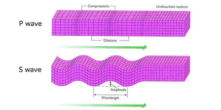P waves and S waves
