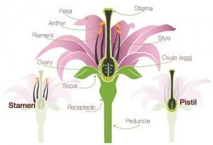Parts of flowers