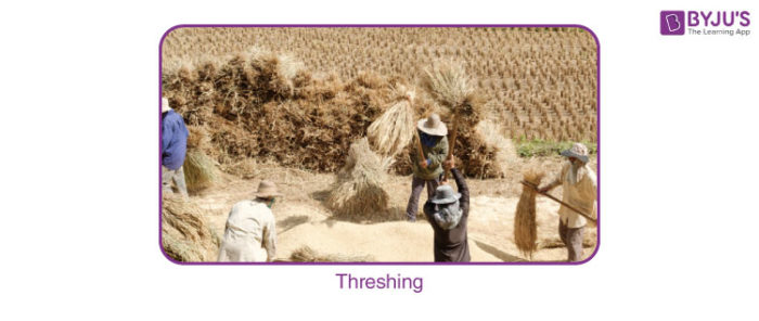 Threshing