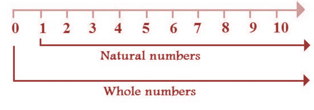 Natural Numbers and Whole numbers on a Number line