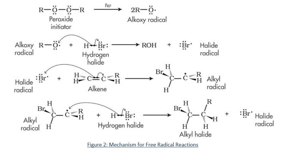 Mechanism of Free Radical