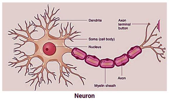 nerve 2