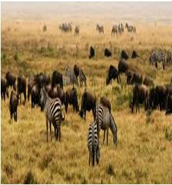 terrestrial habitat