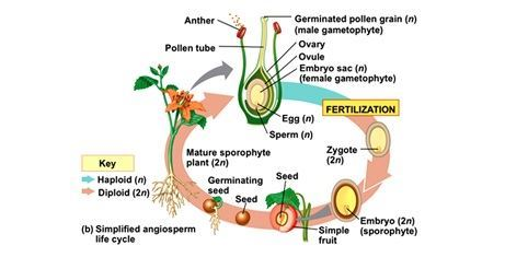 Biology2