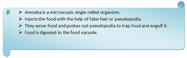 Digestion in amoeba