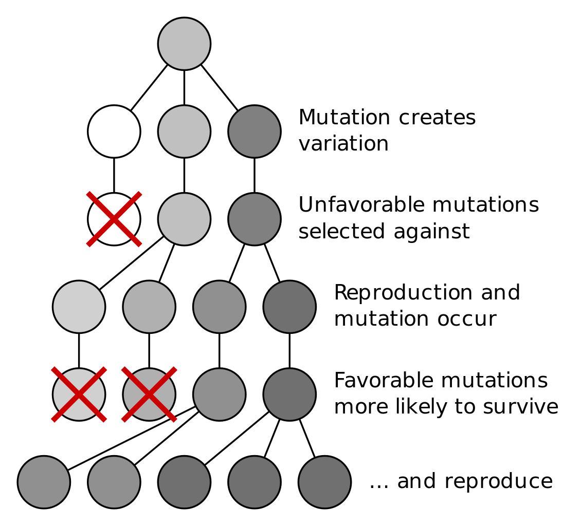 Evolution & Natural Selection - Evolution through Natural Selection