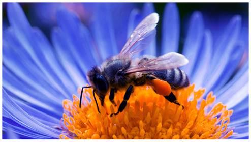 Pollination Method