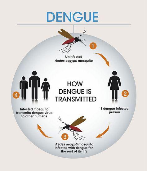 Dengue Fever - Symptoms, Causes and Preventive Measures of Dengue