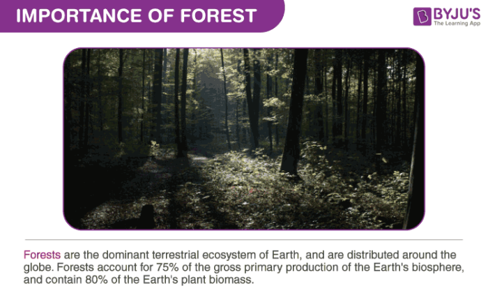 Importance of Forest