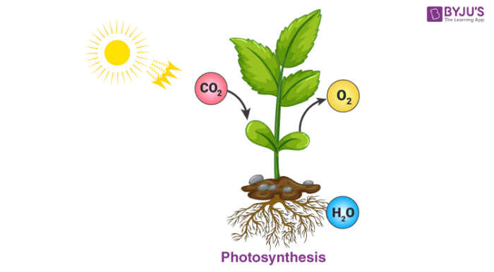 Photosynthesis : Chemical Reactions