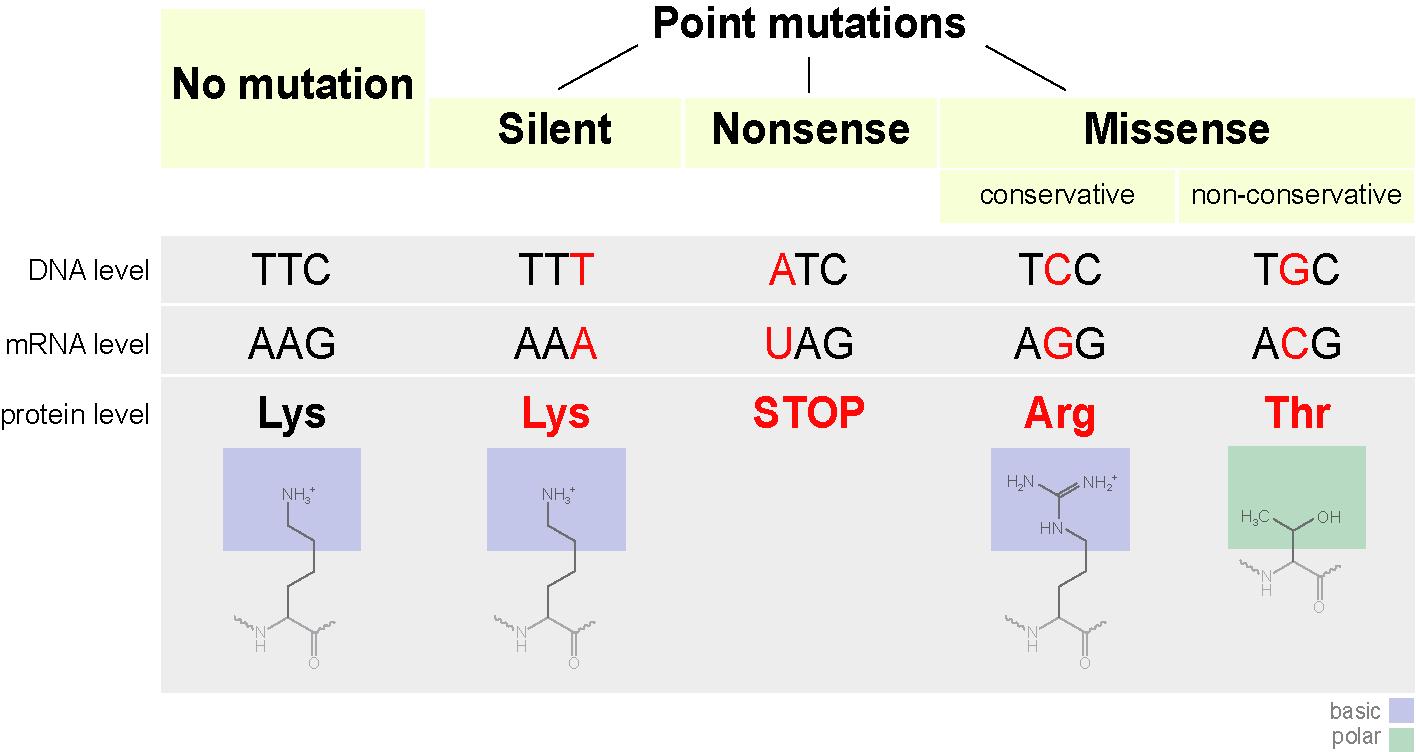 Point mutation
