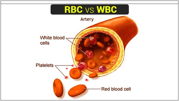 RBC and WBC