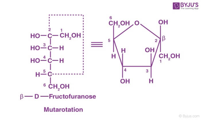 Fructose- A Monosaccharide