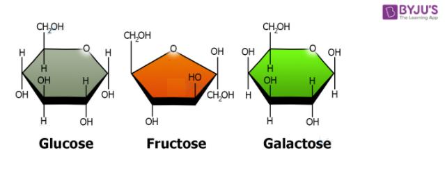 Fructose Monosaccharide