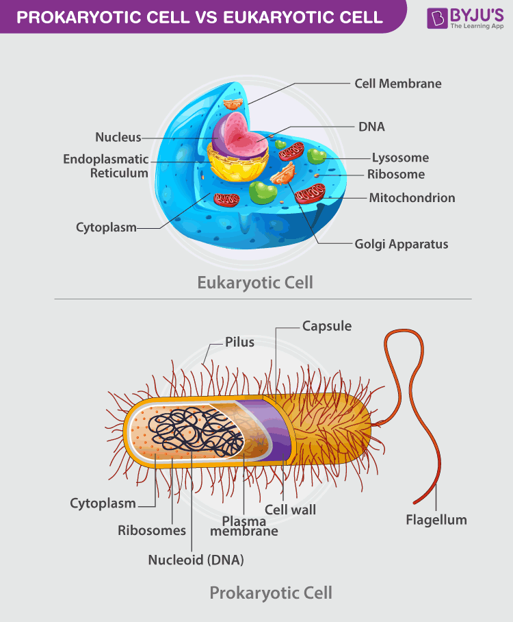 Explore the difference between Prokaryotic and Eukaryotic Cells