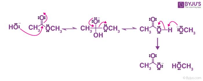 Ester hydrolysis mechanism