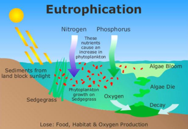 Causes and Effects of Eutrophication