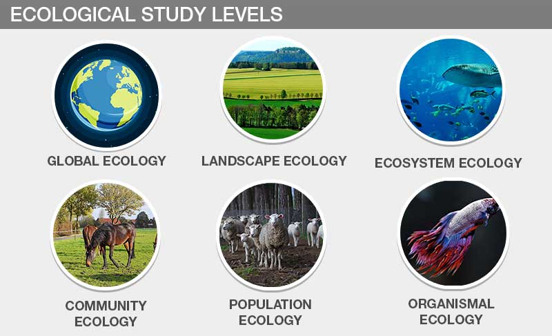 Types of Ecology