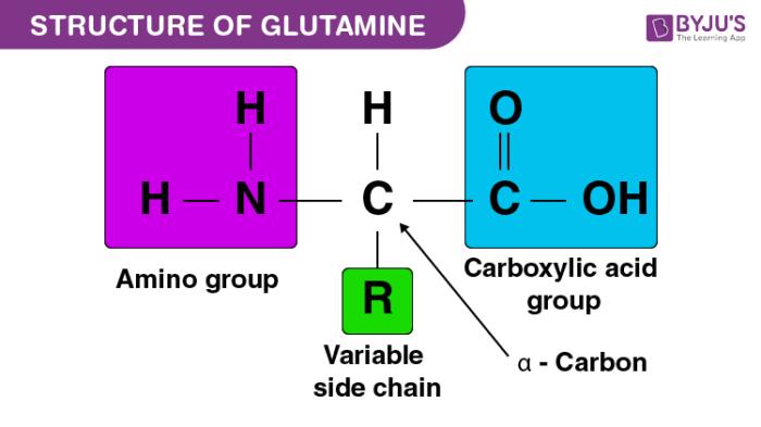 Structure ofGlutamine
