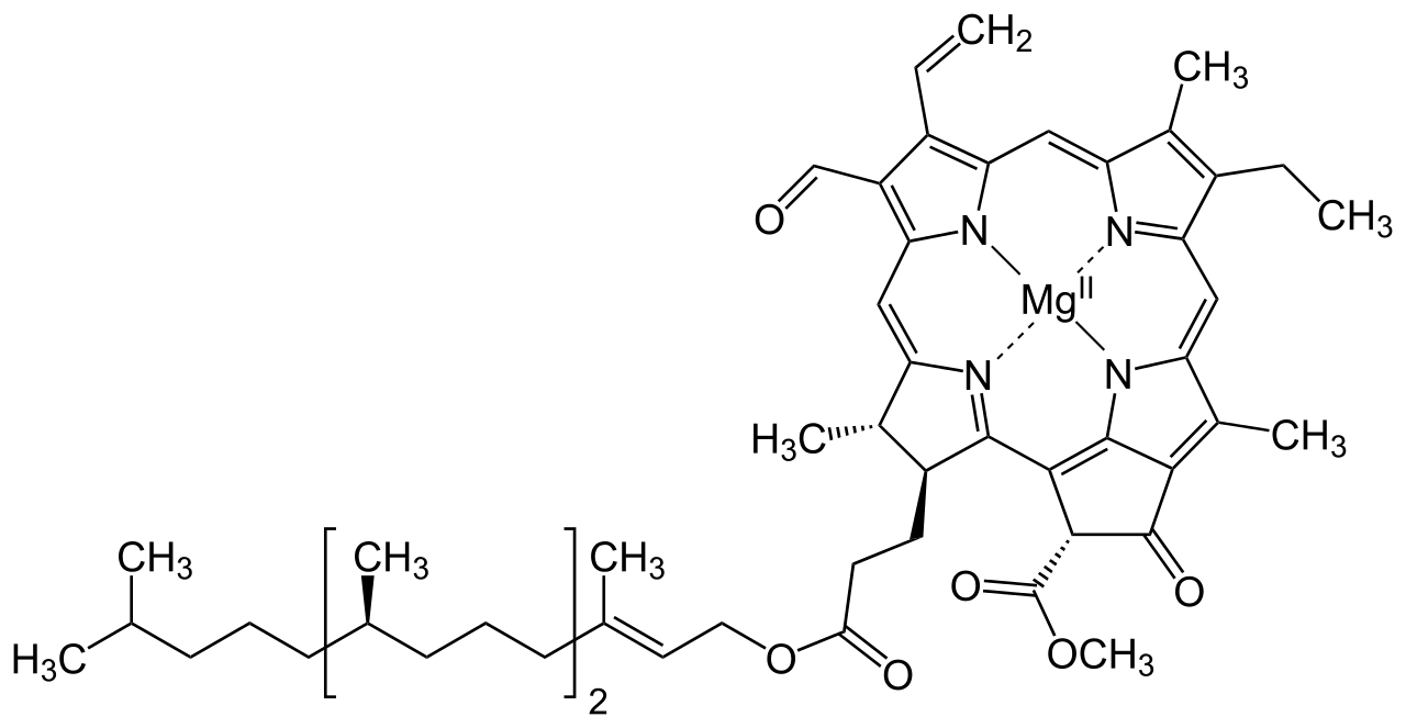 Structure of chlorophyll