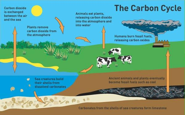 The importance of Carbon Cycle