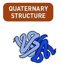 Quaternary Structure of Protein
