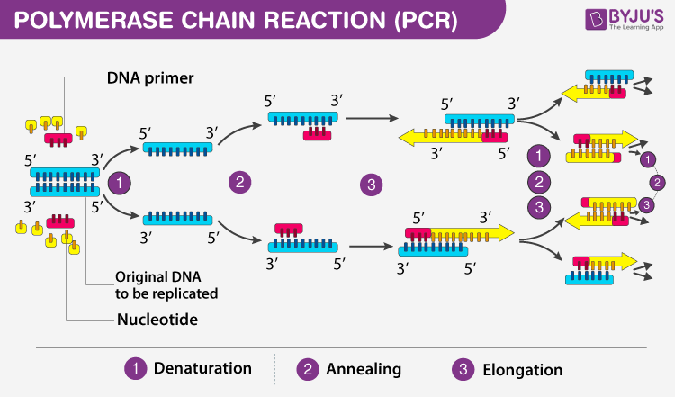 Recombinant DNA Technology - Process And Its Applications