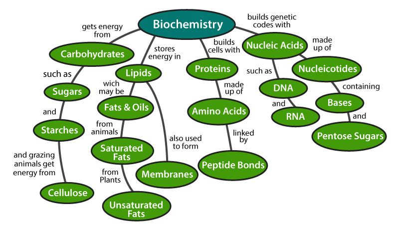 Biomolecules in Living Organisms- The Four Types Of Biomolecules